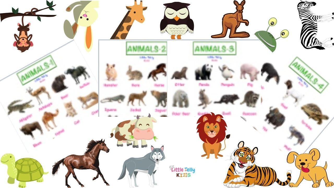 Animals Charts